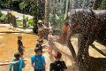 Phuket Elephant Bathing Tours