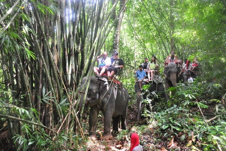 Jungle Safari tours